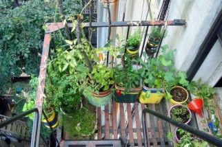 Easy-Gardening-Projects-Fire-Escape-Garden-537x357